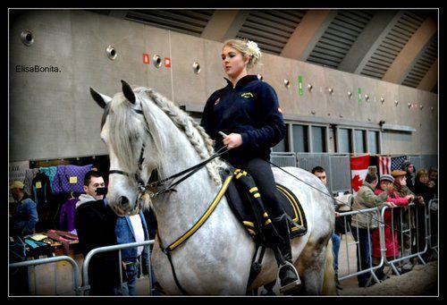 Salon du cheval de tournai et mons nos photos - Salon du cheval a mons ...